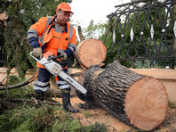 В Сочи штормовым ветром повалило десятки деревьев, движение парализовано