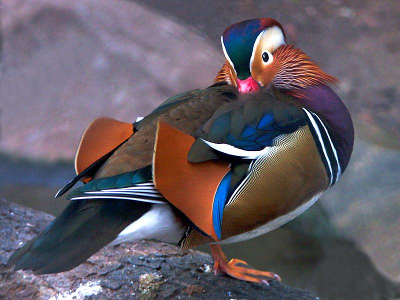 Воронежский зоопарк решил усыпить всех своих птиц из-за инфекции