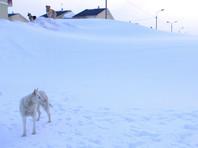 На Алтае снегом на трассе заблокировало десятки автомобилей и несколько автобусов