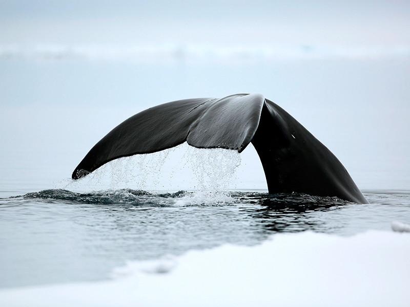 Прокуратура Хабаровского края проверяет случай наезда катера с туристами на кита