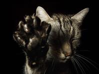 Сделка века: амурчанин готовится продать своего кота-экстрасенса за пять миллионов рублей
