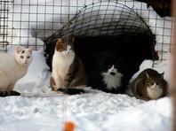 Замурованных в московском подвале кошек кормят с помощью пинцетов