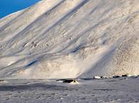 Белые медведи наведались в заброшенный поселок на Чукотке и катались с горок (ФОТО)