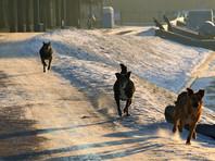 В центре Москвы собаки насмерть загрызли пенсионерку