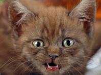 В Кисловодске спасатели избавили жильцов дома от агрессивного котенка