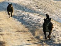 В Дагестане собаки загрызли насмерть 9-летнюю девочку