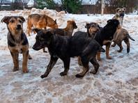 В Махачкале почти неделю идет бесконтрольный отстрел бродячих собак. Правозащитники бьют тревогу