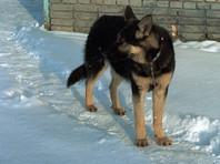 В Алтайском крае собака спасла жизнь брошенному матерью младенцу