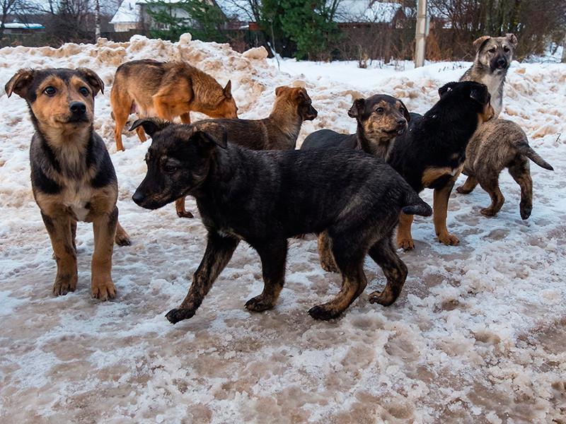 В Махачкале зоозащитники бьют тревогу из-за неконтролируемого отстрела бродячих собак на улицах города