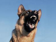 Хозяину одной из собак, загрызших девочку на Урале, предъявили обвинение