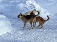 СК заинтересовался кровавыми расправами над собаками в Благовещенске