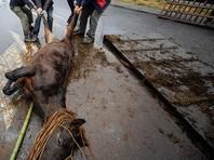 В Омской области из реки достали табун мертвых лошадей
