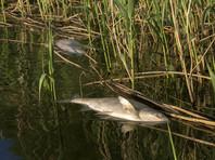 В озерах под Волгоградом массово гибнет рыба: подозревают химикаты