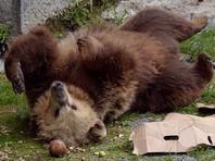 Полиция ищет жителя Таганрога, гулявшего по городу с медведем на поводке