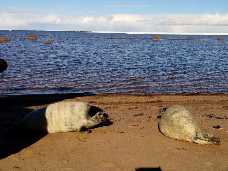 Водолазы Росгвардии задержали тюленей, на льдине подобравшихся к АЭС