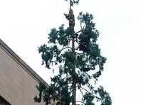 Пьяный волгоградец просидел два часа на дереве, требуя вертолет и сосиску в тесте