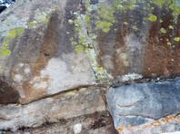 В Онгудайском районе найден самый крупный петроглиф Горного Алтая