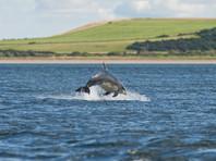 В Семикаракорске сфотографировали дельфинов, проплывших вверх по Дону более 100 км