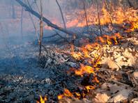 Ситуация с лесными пожарами в России сейчас уже хуже, чем по итогам прошлого года, заявил Хлопонин