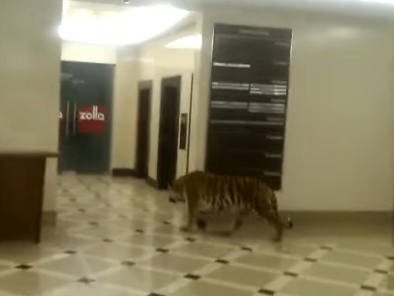 Полиция проводит проверку после появления в Сети видео с гуляющим по ТЦ в Хабаровске тигром