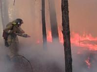 В Сибири жители продолжают провоцировать лесные пожары, заявил глава МЧС