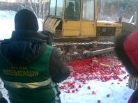 """Россельхознадзор отчитался об  уничтожении  11 тысяч тонн """"санкционки"""" с начала действия продэмбарго"""