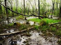 79-летний сибиряк пошел в лес за цветами на юбилей жены и увяз в болотах на три дня