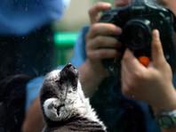 Юрий Чайка распорядился проверить зоопарки и океанариумы во исполнение поручения Путина по защите краснокнижных животных