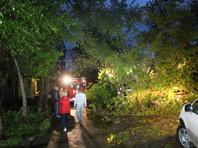 Ураган в Барнауле повалил деревья, повредил десятки машин, оборвал ЛЭП: есть пострадавшие (ФОТО)