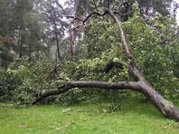 Во время урагана в Омске придавило деревом девятилетнего мальчика