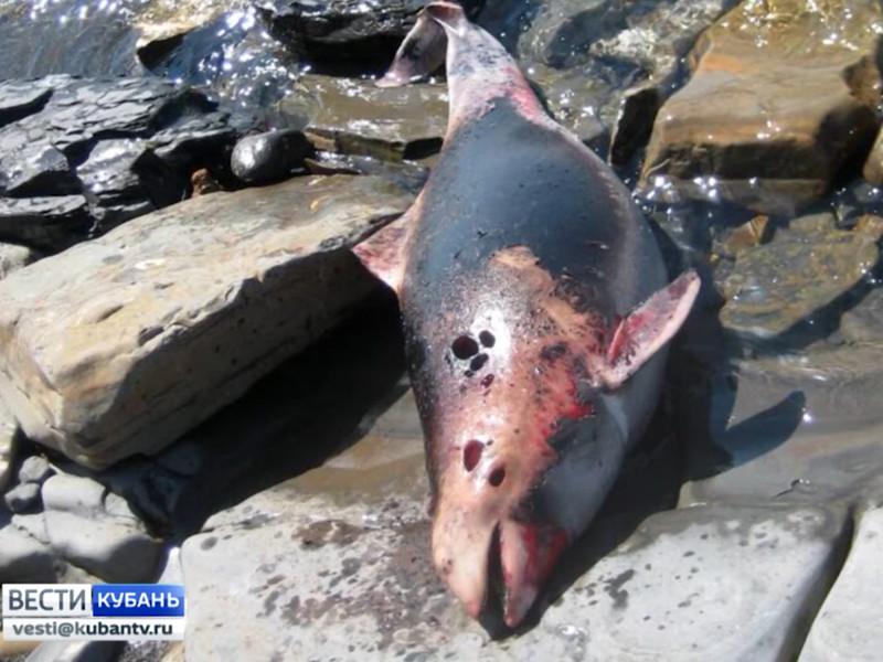 Появились первые версии причин массовой гибели дельфинов на берегах Кубани и Крыма