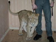 Суд забрал у владельца львицу, покусавшую мальчика в Энгельсе