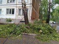 Поваленное ветром дерево придавило пензенца в Саранске