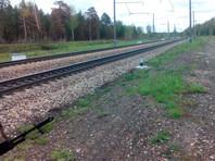 В Красноярском крае медвежонок погиб под колесами поезда, спасаясь от лесных пожаров