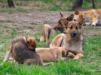 Дюжина собак растерзала мужчину в Югре (ВИДЕО)