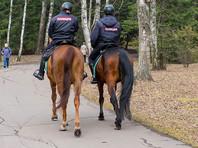 Полиция Москвы объявила тендер на закупку 10 лошадей для охраны порядка на митингах