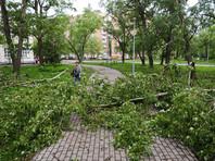 В больнице умер 8-летний мальчик - шестая жертва урагана в Подмосковье