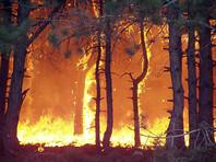 В Красноярском крае ввели режим ЧС - каждый день там разгораются несколько десятков новых пожаров