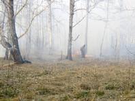 МЧС настоятельно рекомендовало вернуть особый противопожарный режим в регионах Сибири из-за грядущей аномальной жары