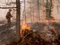 Площадь лесных пожаров в Сибири возросла за сутки более чем вдвое