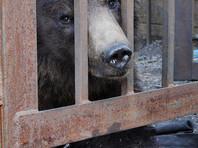Новошахтинцы бьют тревогу из-за голодающих животных давно закрытого зоопарка  (ФОТО, ВИДЕО)