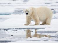 Правительство снова хочет сократить расходы на развитие Арктики - теперь в 17 раз