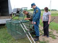 Специалисты по контролю за бродячими животными для отлова используют пневматические трубки с наркозом и ловушки