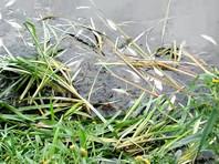 Прокуратура Ульяновской области проверяет загрязнение почвы отходами от производства спирта