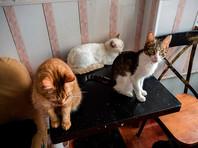 В частном доме в Омске нашли скелет пенсионера, обглоданный кошками