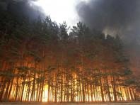 В Волгоградской области из-за пожаров и сильного ветра введен режим ЧС, в деревнях отключили свет