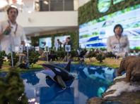 Самым популярным лотом аукциона в рамках ВЭФ в поддержку редких животных Дальнего Востока стал тур с министром экологии Донским