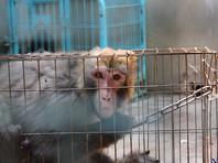 При покупке РАН обезьян для опытов украли почти полмиллиарда рублей