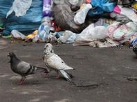 Строителей мусоросжигательных заводов в утопающем в отходах Дагестане будут охранять ветераны спецслужб