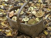 Кузбасская пенсионерка прожила в тайге неделю, согреваясь в коконе из листьев